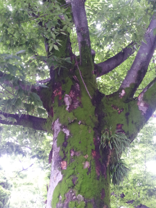 Tree in Peace Park, Hiroshima